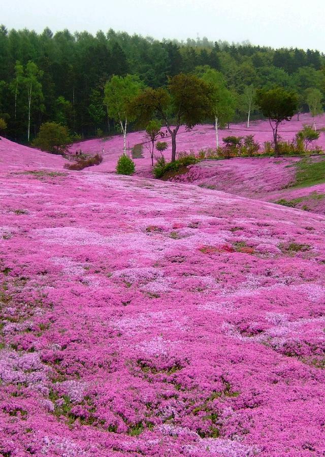 Ghé thăm những cánh đồng hoa xuân đẹp ngoạn mục ở Kansai - 4