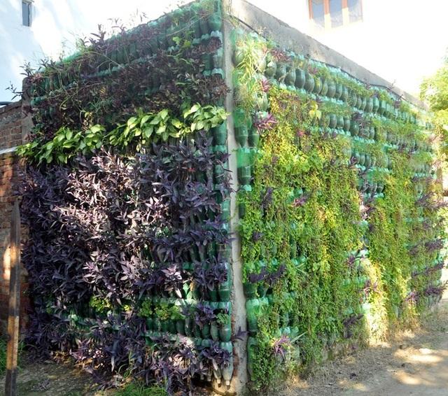 Biến chai nhựa thành vườn, vợ chồng khiến căn nhà mát mẻ hơn 5 độ C - 2