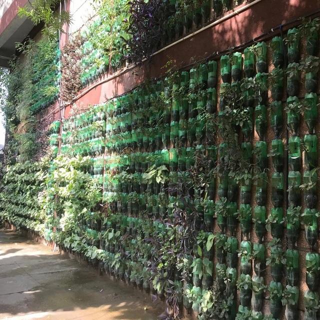 Biến chai nhựa thành vườn, vợ chồng khiến căn nhà mát mẻ hơn 5 độ C - 4