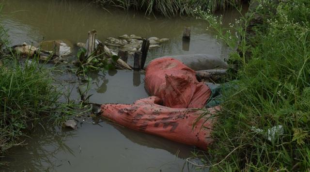 Kinh hãi cảnh lợn chết nổi lềnh bềnh dưới mương nước - 1
