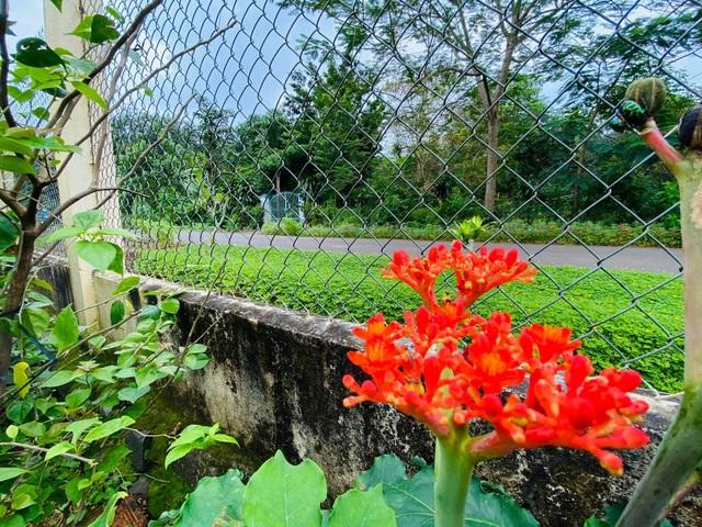 Vợ chồng 8X lên kế hoạch về hưu sớm, làm nhà vườn rộng 6000m2 ở Vũng Tàu - 8