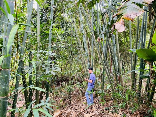 Vợ chồng 8X lên kế hoạch về hưu sớm, làm nhà vườn rộng 6000m2 ở Vũng Tàu - 9