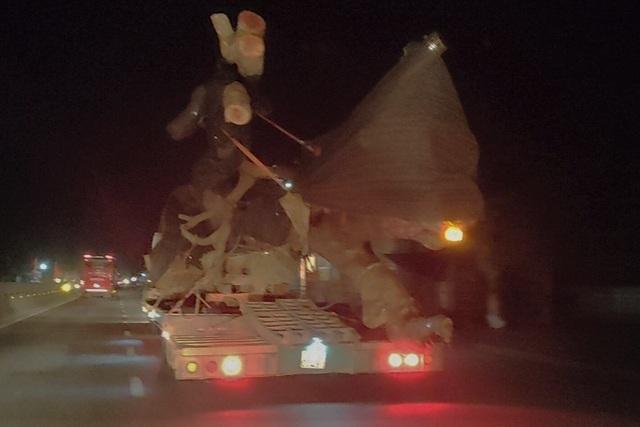 CSGT truy đuổi hàng chục kilomet bắt xe chở cây quái thú - 1