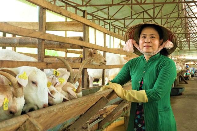Nuôi dê lấy sữa, nông dân ở Hậu Giang bỏ túi hàng trăm triệu đồng mỗi năm - 1