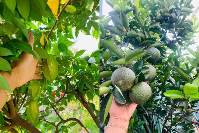 Khu vườn 720m2 đẹp như resort thu nhỏ người chồng tặng vợ ở Đồng Nai - 9