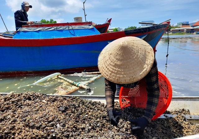 Bình Định: Mưu sinh nghề cào phễnh, vẹm ven đầm Thị Nại - 7