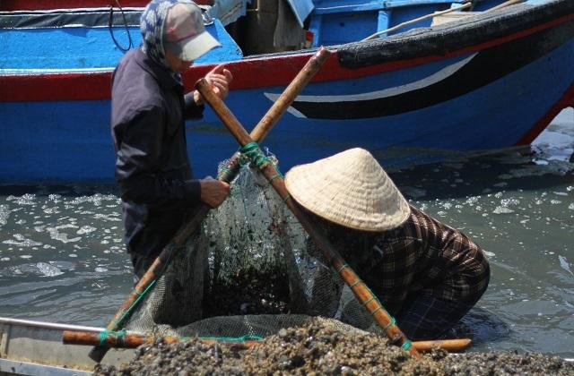 Bình Định: Mưu sinh nghề cào phễnh, vẹm ven đầm Thị Nại - 4