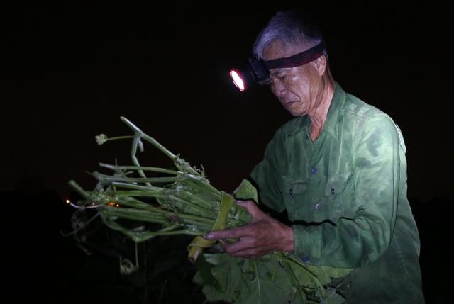 Hà Nội: Dậy từ 1h cắt rau bí, người trồng rau thu hàng chục triệu đồng/vụ - 4