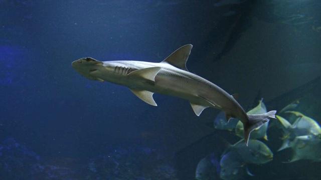 Giải mã bí ẩn cách cá mập dùng từ trường Trái đất để… dò đường - 1