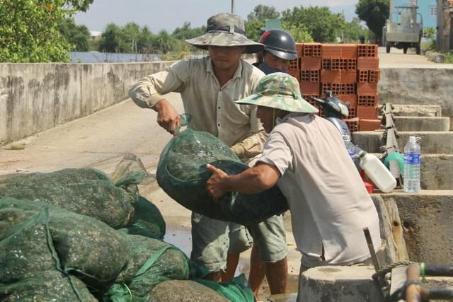 Bình Định: Mưu sinh nghề cào phễnh, vẹm ven đầm Thị Nại - 5