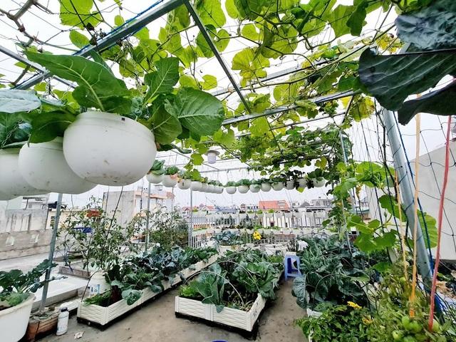 Mẹ đảm Hải Phòng vác đất lên sân thượng, tự tạo nông trại hữu cơ xanh tốt - 1