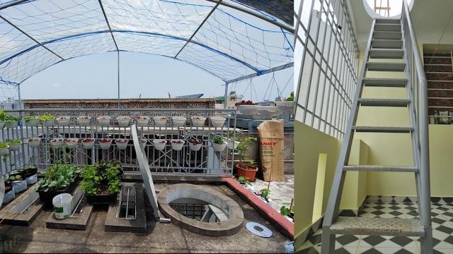 Mẹ đảm Hải Phòng vác đất lên sân thượng, tự tạo nông trại hữu cơ xanh tốt - 2