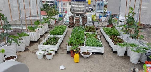 Mẹ đảm Hải Phòng vác đất lên sân thượng, tự tạo nông trại hữu cơ xanh tốt - 3