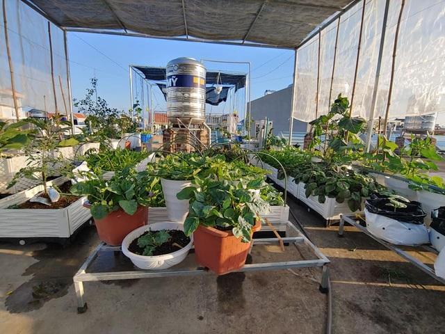 Mẹ đảm Hải Phòng vác đất lên sân thượng, tự tạo nông trại hữu cơ xanh tốt - 4