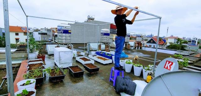 Mẹ đảm Hải Phòng vác đất lên sân thượng, tự tạo nông trại hữu cơ xanh tốt - 5