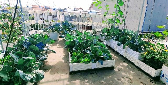 Mẹ đảm Hải Phòng vác đất lên sân thượng, tự tạo nông trại hữu cơ xanh tốt - 8