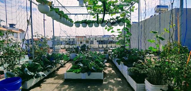 Mẹ đảm Hải Phòng vác đất lên sân thượng, tự tạo nông trại hữu cơ xanh tốt - 9