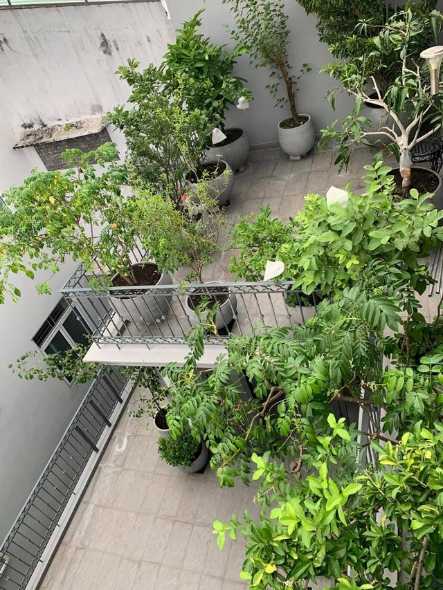 Mát mắt với nhà phố ở Sài Gòn ngập cây xanh, trĩu trịt hoa trái - 2