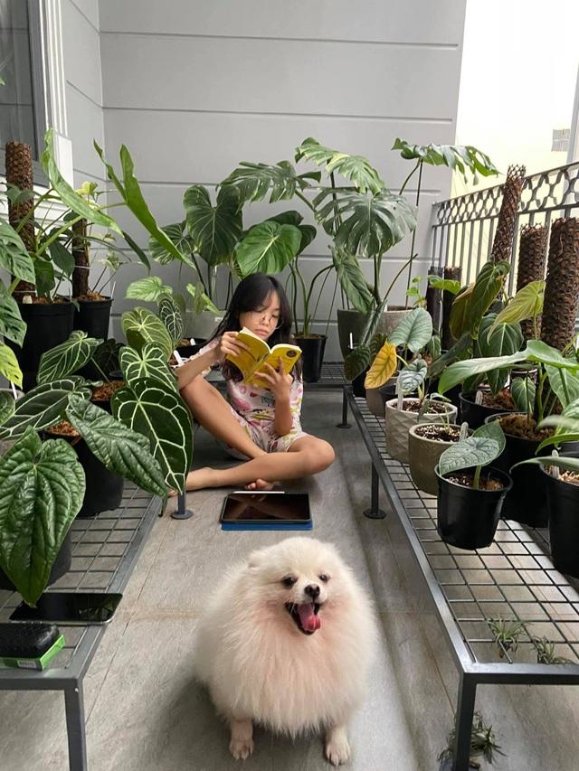 Mát mắt với nhà phố ở Sài Gòn ngập cây xanh, trĩu trịt hoa trái - 7