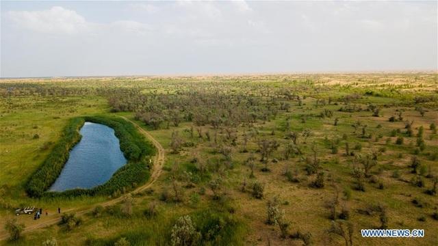 Hành trình 3 thập kỷ phủ xanh kỳ diệu sa mạc rộng thứ 7 Trung Quốc - 1