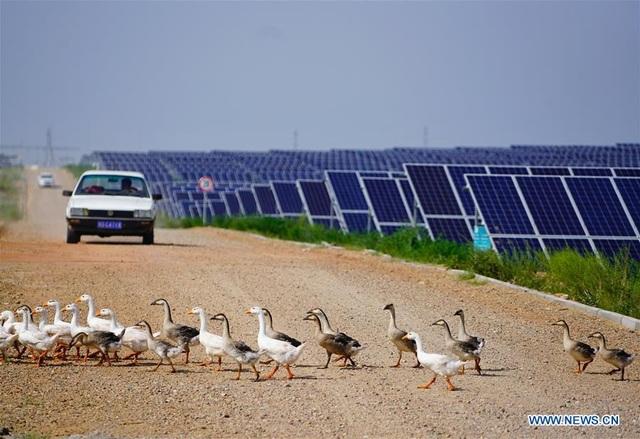 Hành trình 3 thập kỷ phủ xanh kỳ diệu sa mạc rộng thứ 7 Trung Quốc - 7