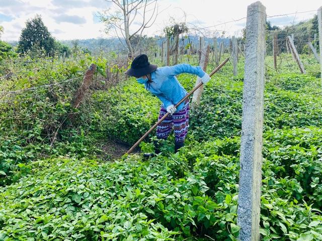 Cô gái bỏ nhà phố, xe sang ở Sài Gòn về quê cuốc đất làm nông dân - 11