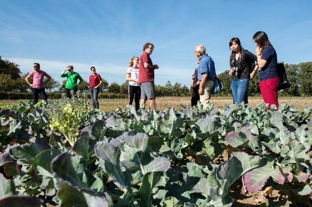 Người dân Hà Lan góp tiền mở trang trại tập thể cùng trồng rau, nuôi gà - 1