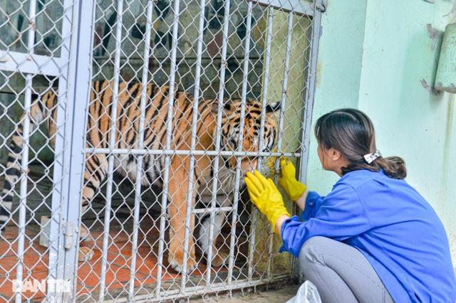 Lạ lùng người phụ nữ 20 năm tắm cho hổ, bắt rận cho sư tử - 5