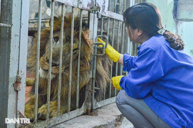 Lạ lùng người phụ nữ 20 năm tắm cho hổ, bắt rận cho sư tử - 2