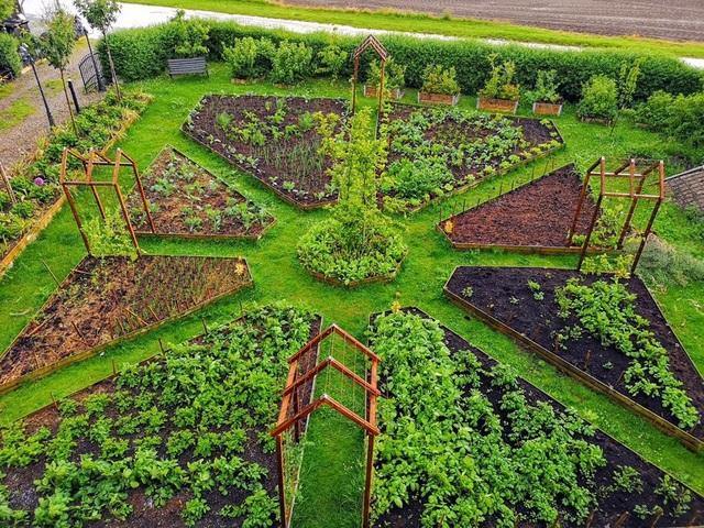 Cuộc sống mơ ước của đôi bạn thân rủ nhau về quê trồng rau, nuôi gà - 4