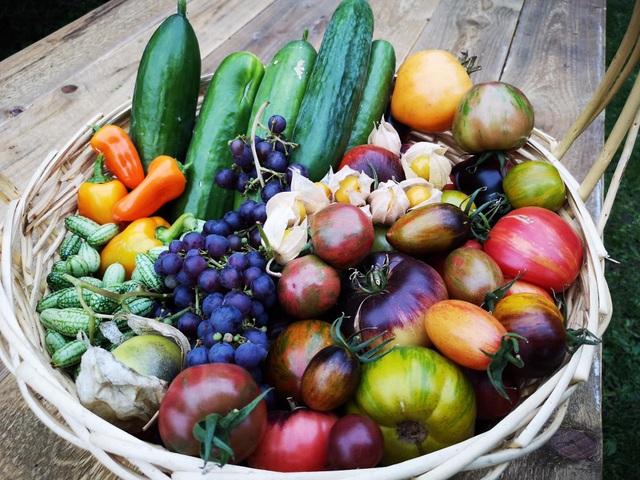 Cuộc sống mơ ước của đôi bạn thân rủ nhau về quê trồng rau, nuôi gà - 5