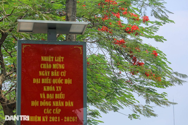 The streets of Hanoi are colorful with red phoenix flowers in May - March