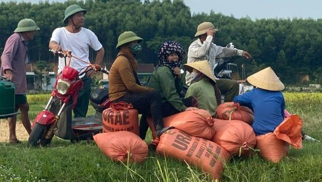 Tranh thủ vụ Đông Xuân, người vận chuyển kiếm tiền triệu mỗi ngày - 5