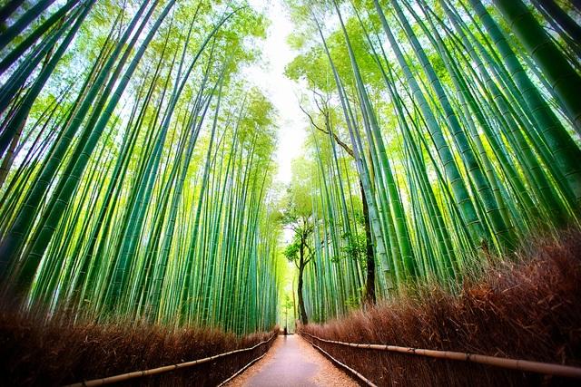 Lạc lối trong rừng tre Arashiyama - niềm tự hào của cố đô Kyoto - 1