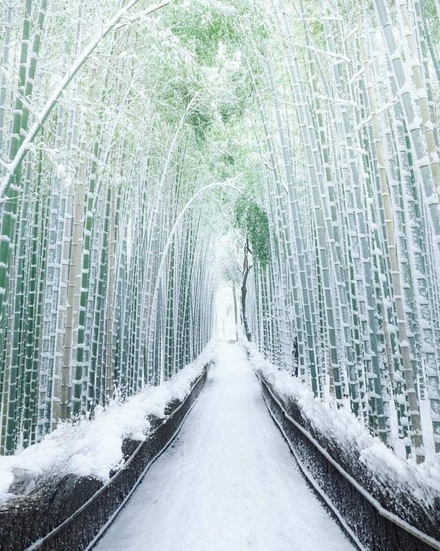 Lạc lối trong rừng tre Arashiyama - niềm tự hào của cố đô Kyoto - 3