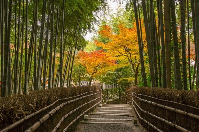 Lạc lối trong rừng tre Arashiyama - niềm tự hào của cố đô Kyoto - 2
