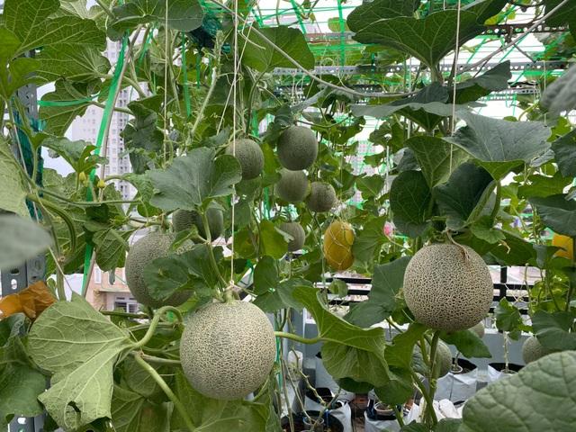 Vườn 10m2 trĩu trịt rau, trái của bà mẹ 4 con thức khuya, dậy sớm - 2