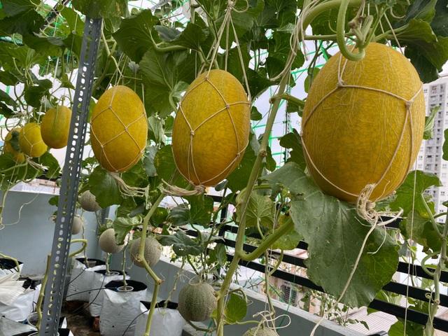 Vườn 10m2 trĩu trịt rau, trái của bà mẹ 4 con thức khuya, dậy sớm - 4