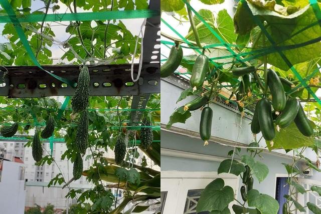 Vườn 10m2 trĩu trịt rau, trái của bà mẹ 4 con thức khuya, dậy sớm - 7