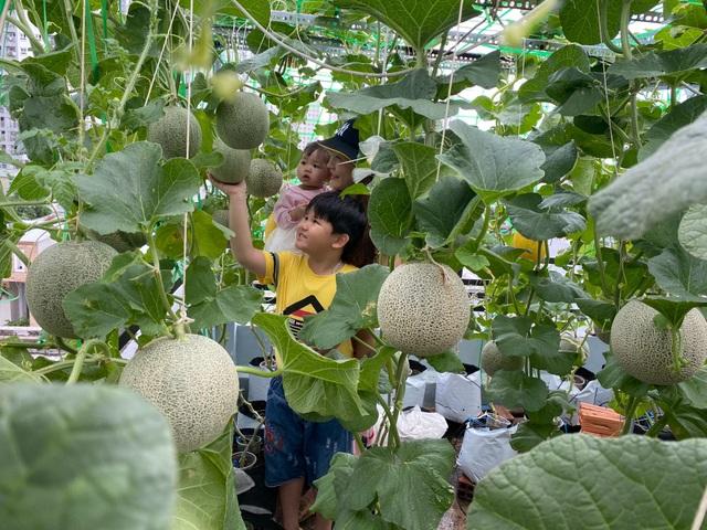 Vườn 10m2 trĩu trịt rau, trái của bà mẹ 4 con thức khuya, dậy sớm - 9