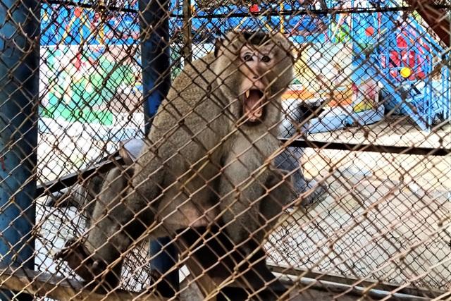Khu du lịch nổi tiếng Bạc Liêu nuôi nhốt động vật rừng chưa rõ nguồn gốc - 2
