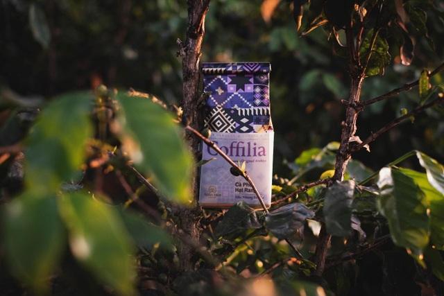 Cà phê Arabica - đặc sản trứ danh của vùng đất Sơn La - 5