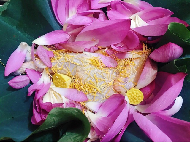 Gà hấp hoa sen thơm nức cho mâm cơm ngày hè - 2