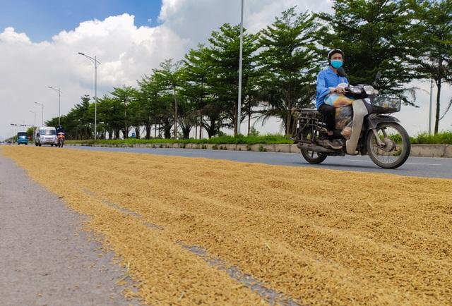 Hà Nội: Đến hẹn lại tới mùa... nông dân dựng lán, chiếm đường phơi thóc - 2