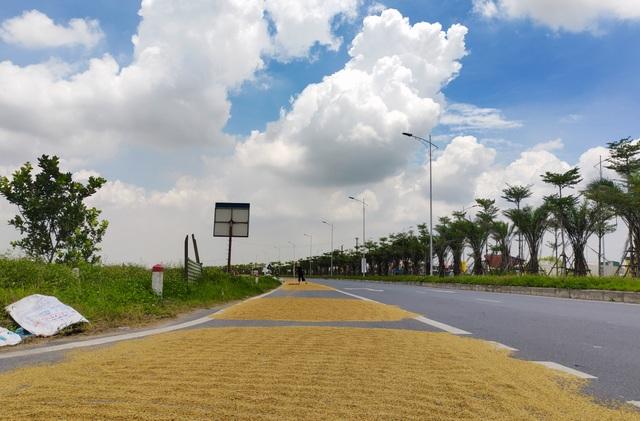 Hà Nội: Đến hẹn lại tới mùa... nông dân dựng lán, chiếm đường phơi thóc - 6