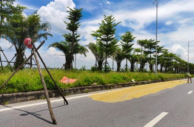 Hà Nội: Đến hẹn lại tới mùa... nông dân dựng lán, chiếm đường phơi thóc - 4
