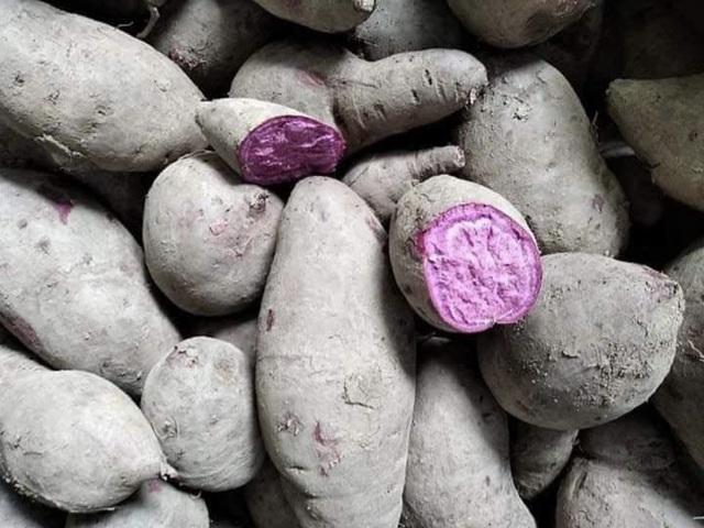 Giá khoai lang giảm kỷ lục, chưa tới 1.000 đồng/kg: Nông dân khóc ròng - 1