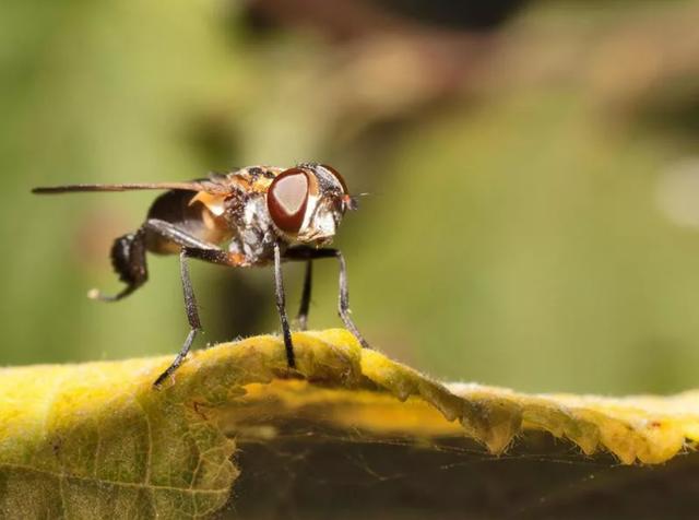 10 loài nguy hiểm nhất hành tinh, hơn một nửa cực gần gũi với con người - 6