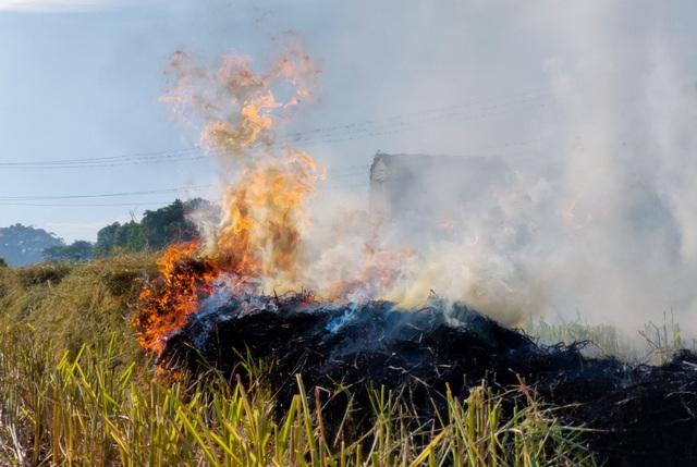 Hà Nội lại vào mùa đốt rơm, ngột ngạt đến tắc thở vì khói bụi - 2
