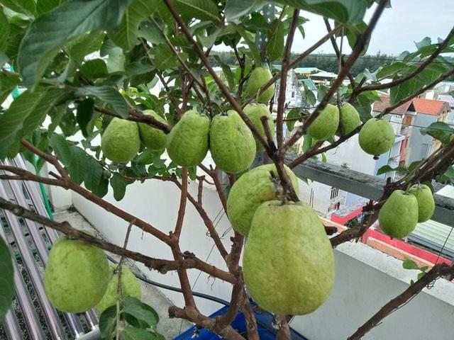 Cả gia đình ở Sài Gòn thỏa thích ăn trái cây nhờ khu vườn trên không - 6